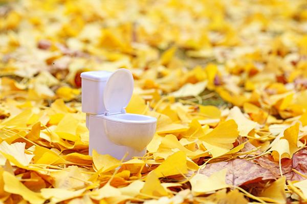 イチョウの葉と洋式トイレ